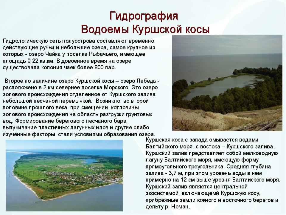 Гидрография Водоемы Куршской косы Гидрологическую сеть полуострова составляют...