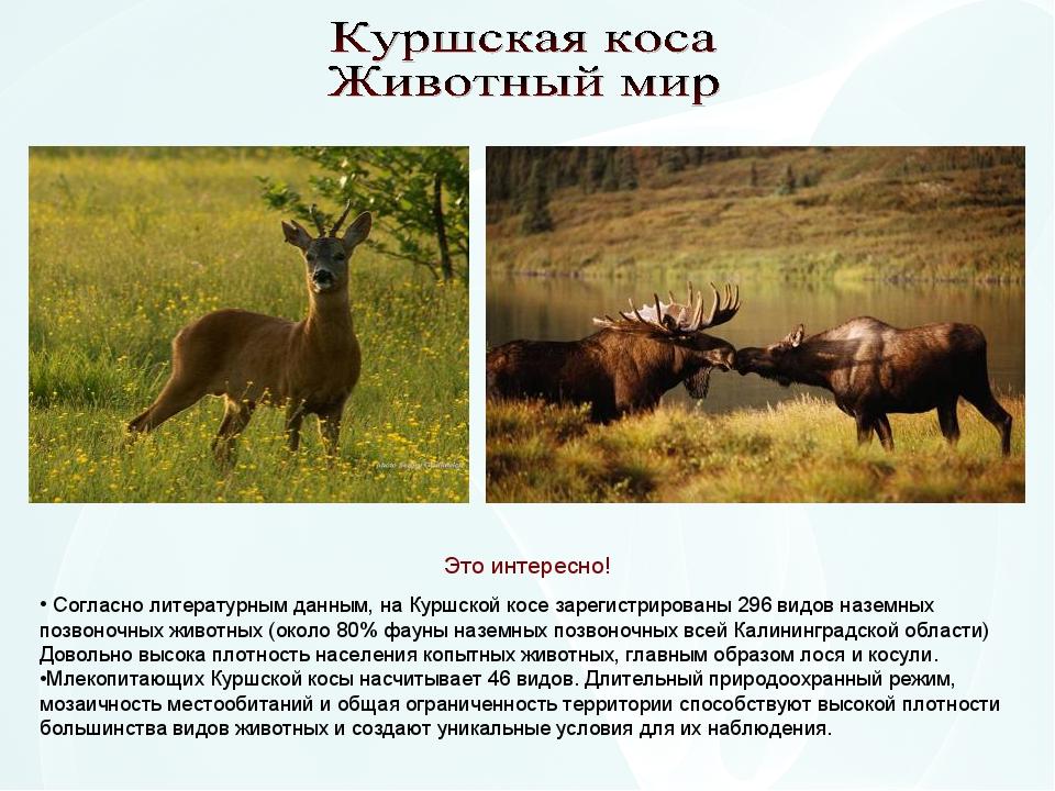 Согласно литературным данным, на Куршской косе зарегистрированы 296 видов на...