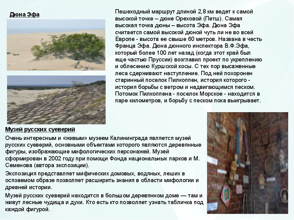 Пешеходный маршрут длиной 2,8 км ведет к самой высокой точке – дюне Ореховой...