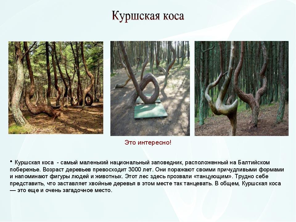 Куршская коса - самый маленький национальный заповедник, расположенный на Ба...