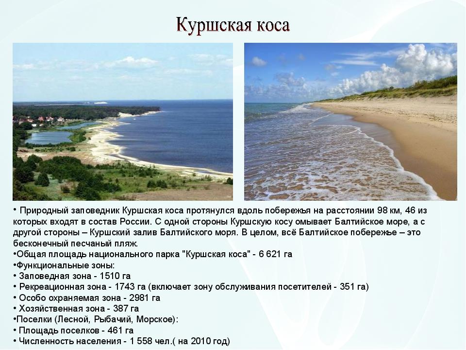 Природный заповедник Куршская коса протянулся вдоль побережья на расстоянии...