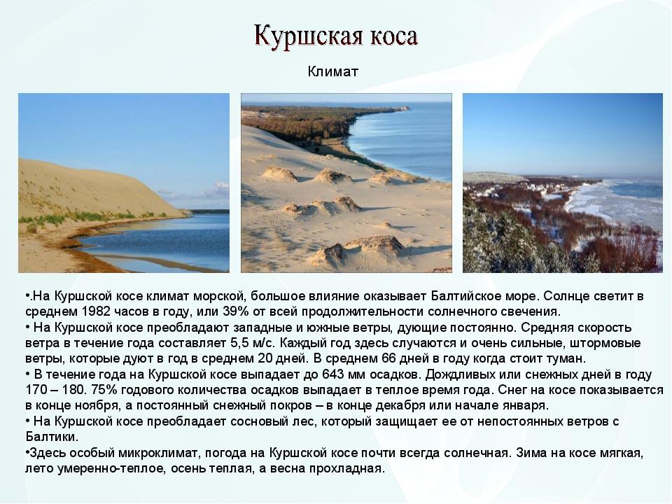 .На Куршской косе климат морской, большое влияние оказывает Балтийское море....