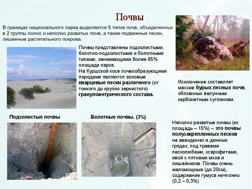 Почвы Почвы представлены подзолистыми, болотно-подзолистыми и болотными типам...