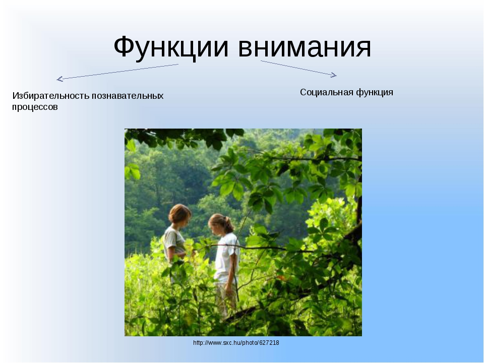 Функции внимания Избирательность познавательных процессов Социальная функция...