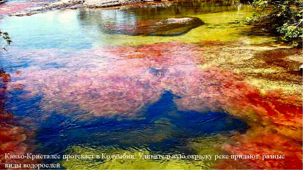 Каньо-Кристалес протекает в Колумбии. Удивительную окраску реке придают разны...