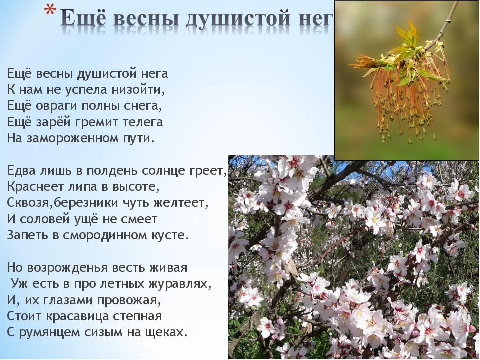 Ещё весны душистой нега К нам не успела низойти, Ещё овраги полны снега, Ещё...