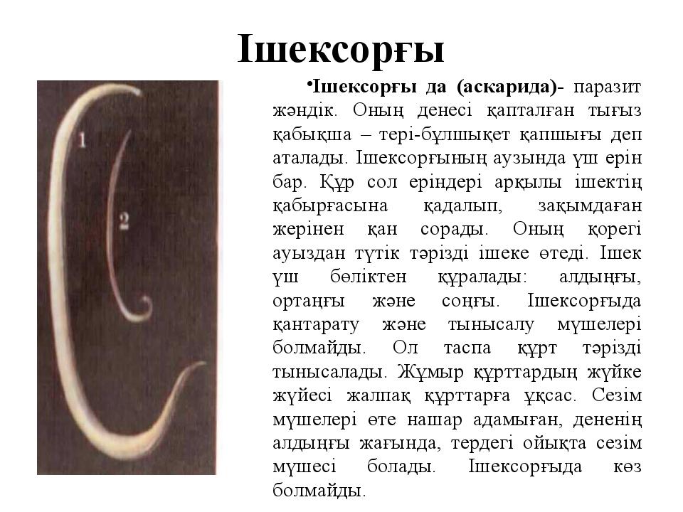 Ішексорғы Ішексорғы да (аскарида)- паразит жәндік. Оның денесі қапталған тығы...