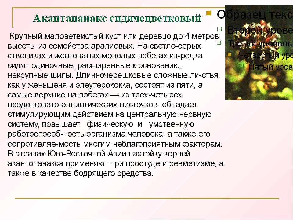 Акантапанакс сидячецветковый Крупный маловетвистый куст или деревцо до 4 метр...