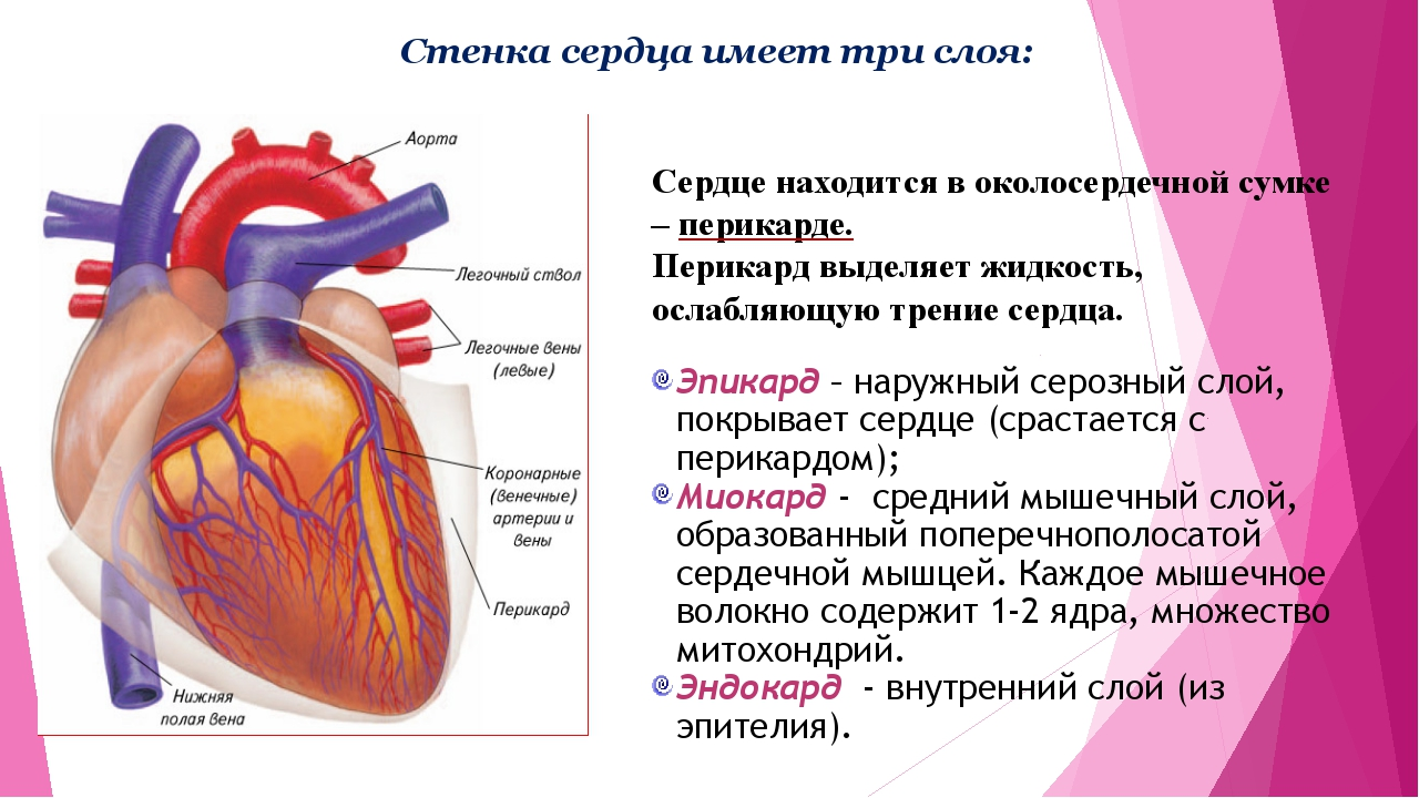 Сердце стенки в картинках