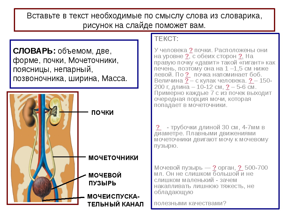 Вставьте в текст необходимые по смыслу слова из словарика, рисунок на слайде...