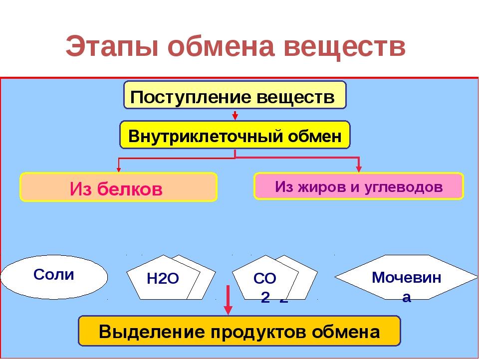 Этапы обмена веществ Н2О СО2 Мочевина Соли Поступление веществ Н2О СО2 Внутри...