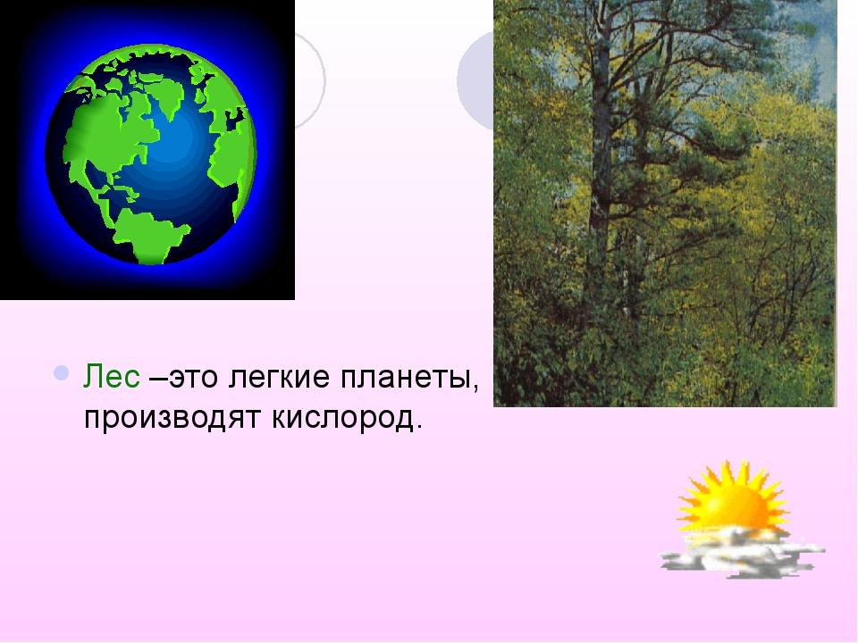 Лес –это легкие планеты, которые производят кислород.