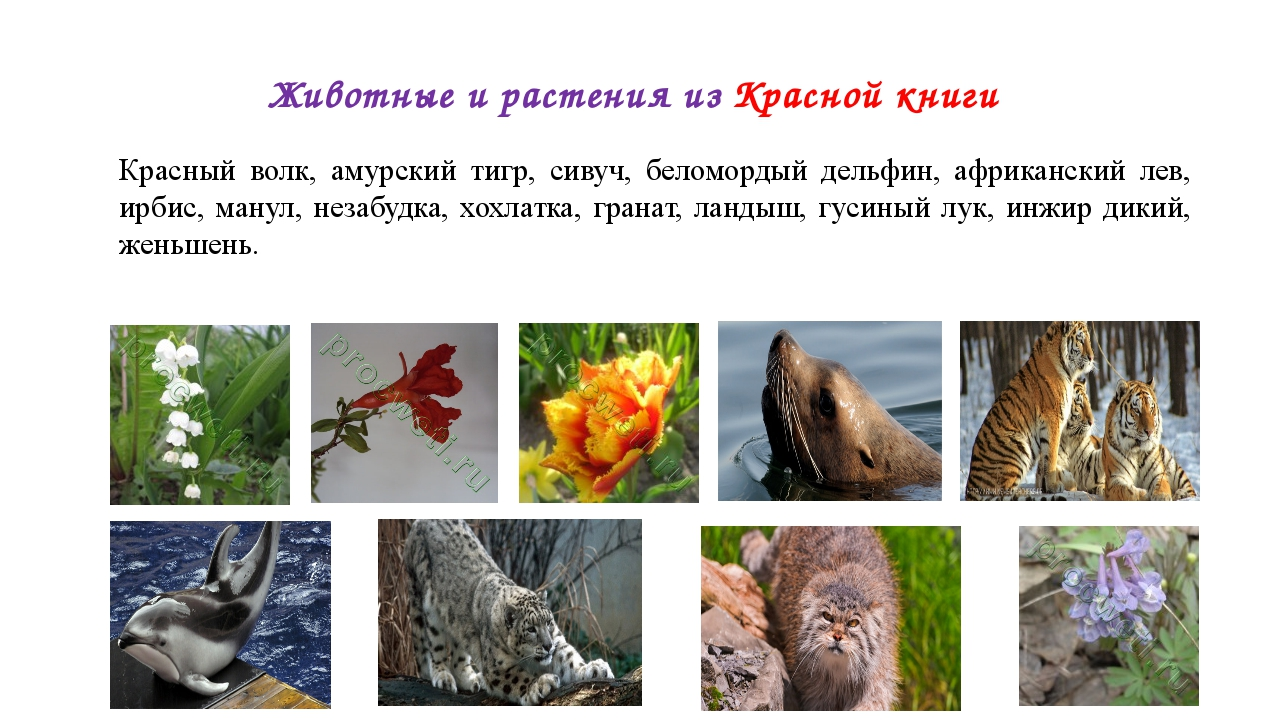 картинки из красной книги животные и растения россии одна дагестанская