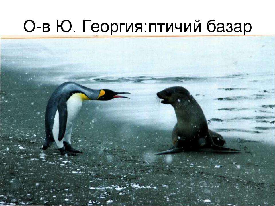 О-в Ю. Георгия:птичий базар