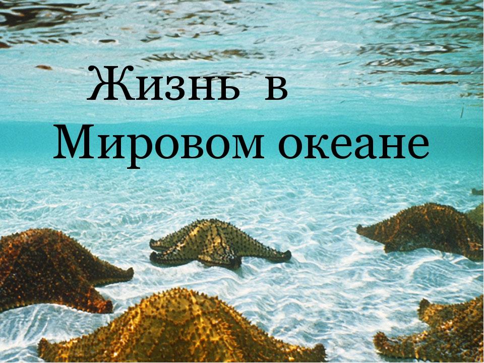 Жизнь в Мировом океане