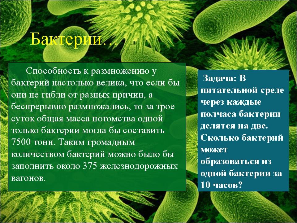 Способность к размножению у бактерий настолько велика, что если бы они не ги...