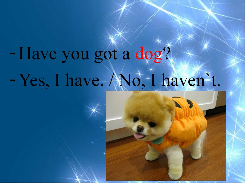 Have you got a dog? Yes, I have. / No, I haven`t.
