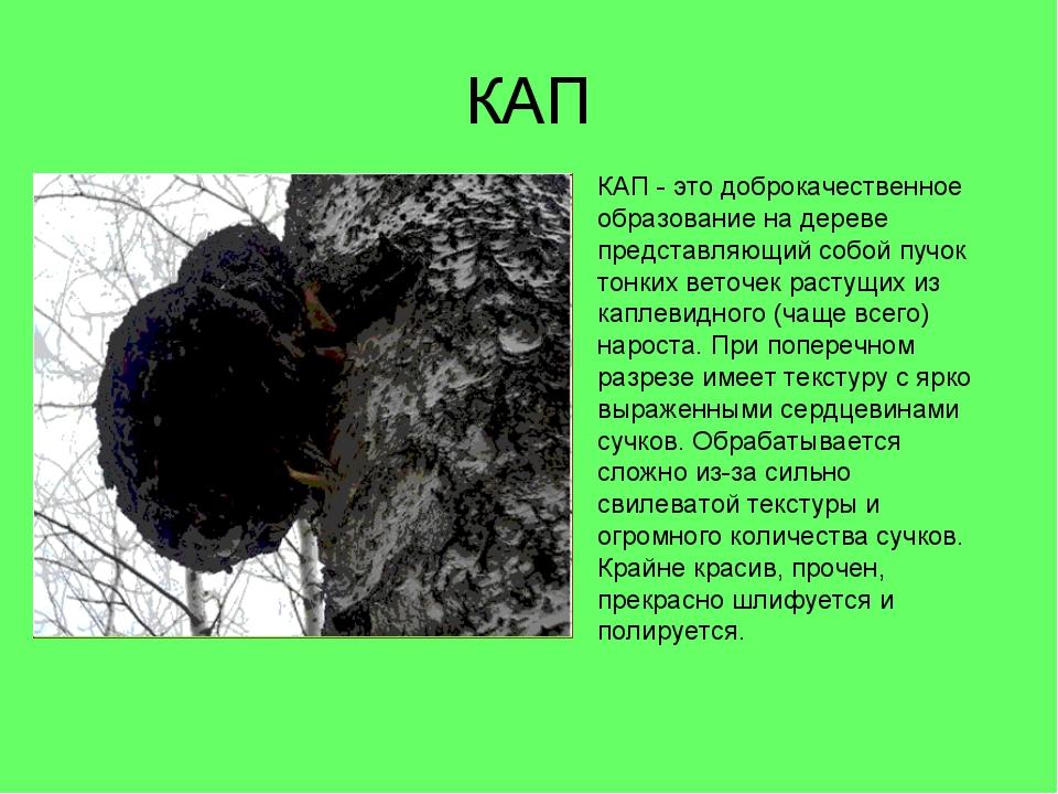 КАП КАП - это доброкачественное образование на дереве представляющий собой пу...