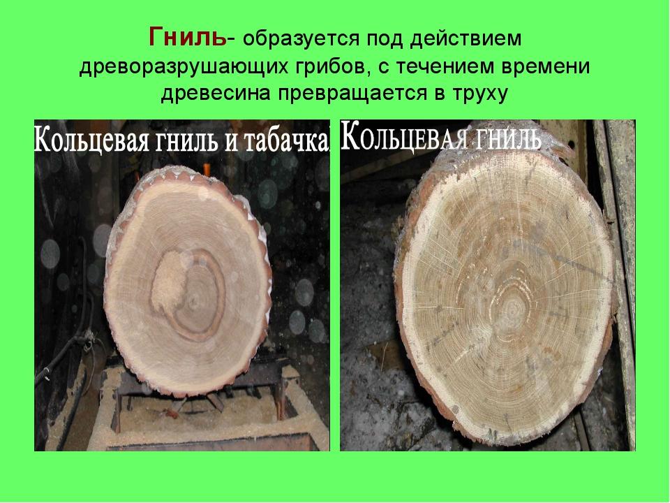 Гниль- образуется под действием древоразрушающих грибов, с течением времени д...