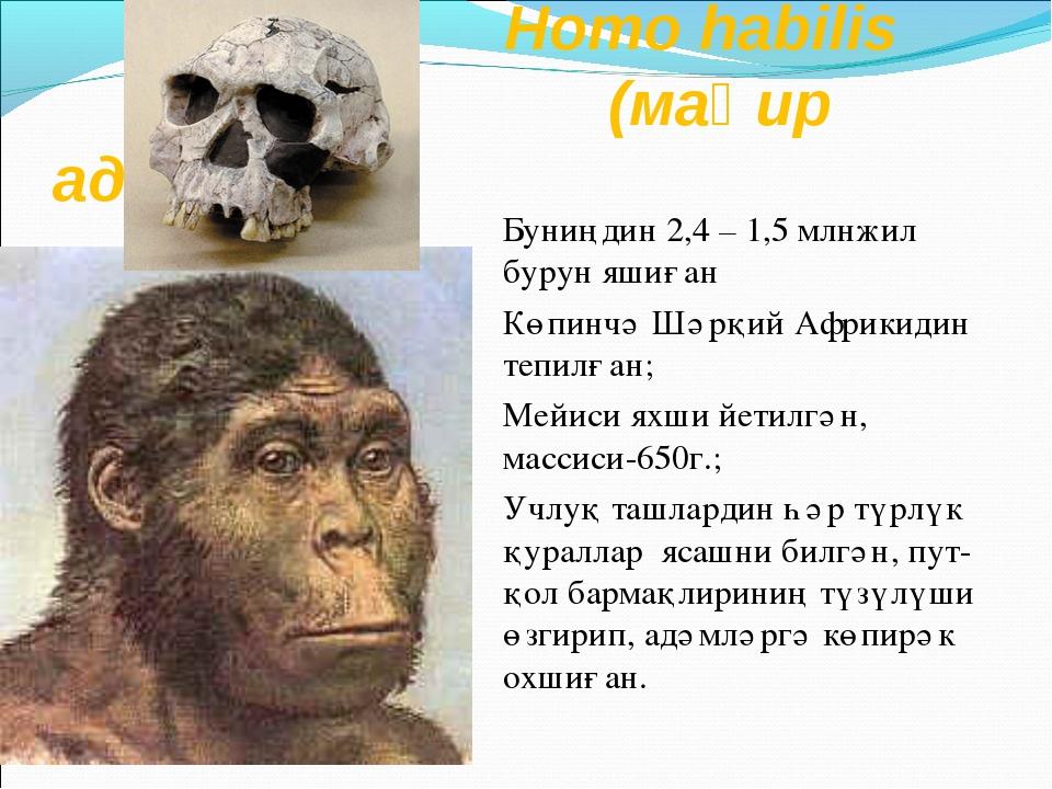 Homo habilis (маһир адәм) Буниңдин 2,4 – 1,5 млнжил бурун яшиған Көпинчә Шәр...