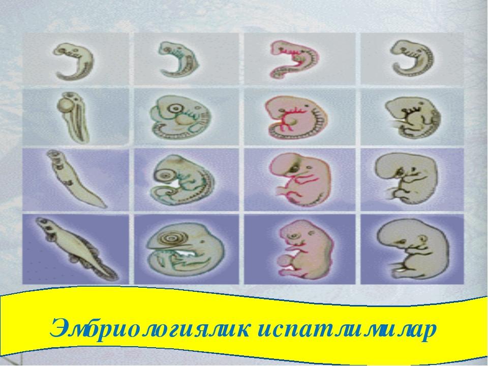 Эмбриологиялик испатлимилар