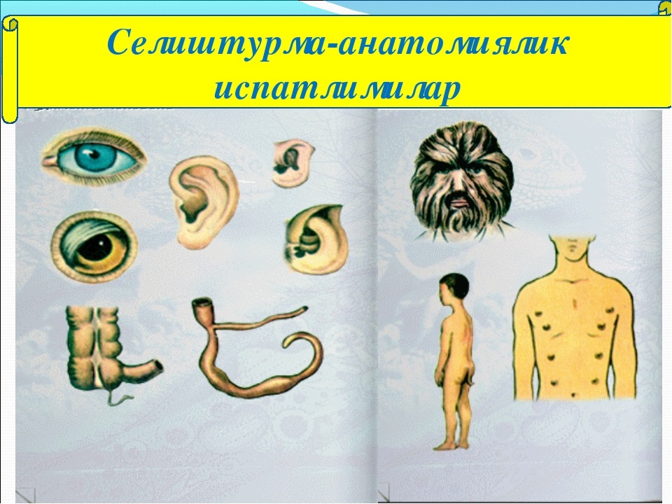 Селиштурма-анатомиялик испатлимилар