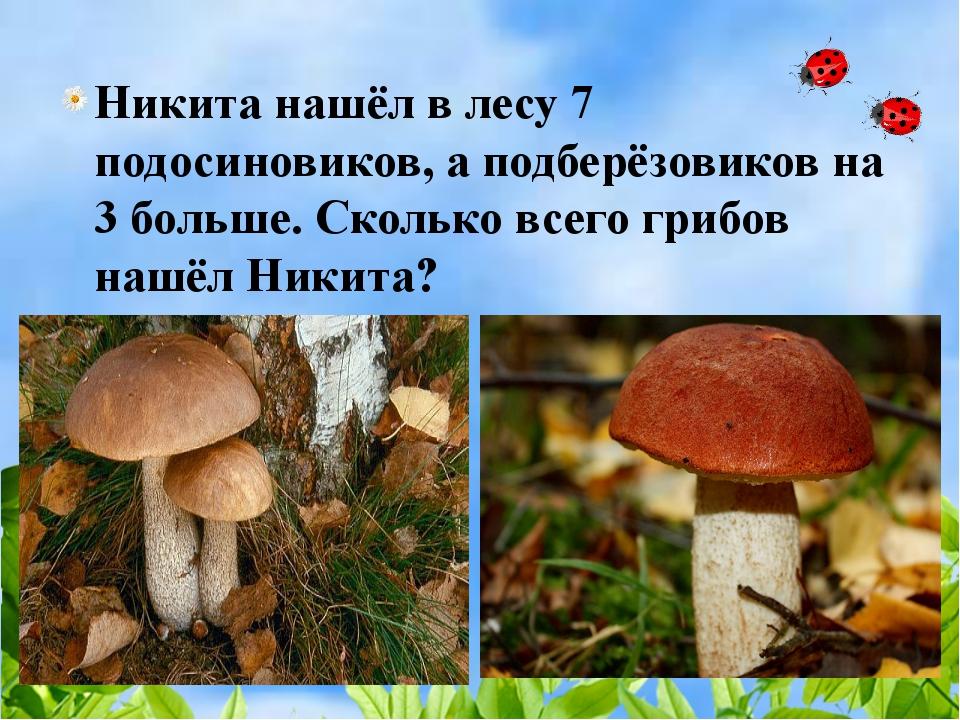 Никита нашёл в лесу 7 подосиновиков, а подберёзовиков на 3 больше. Сколько в...