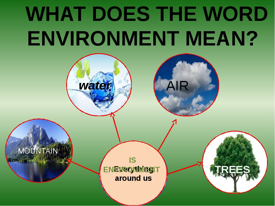 MOUNTAIN TREES AIR water Everything around us 	WHAT DOES THE WORD ENVIRONMENT...