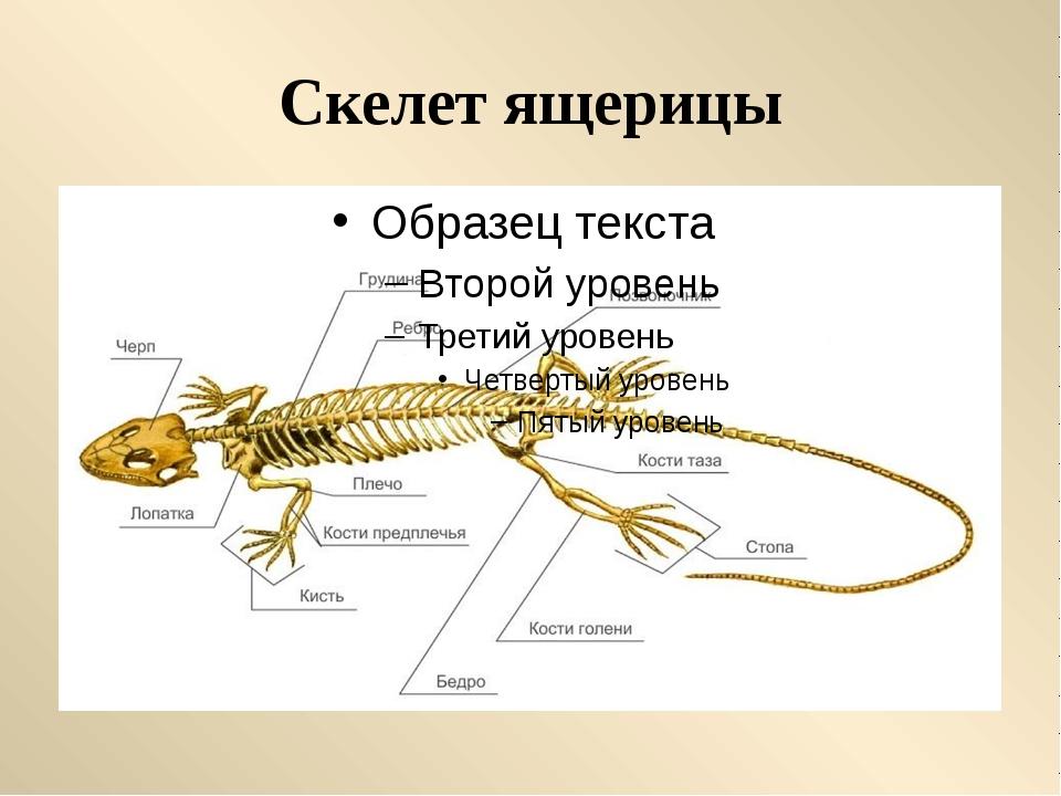 Особенности размножения