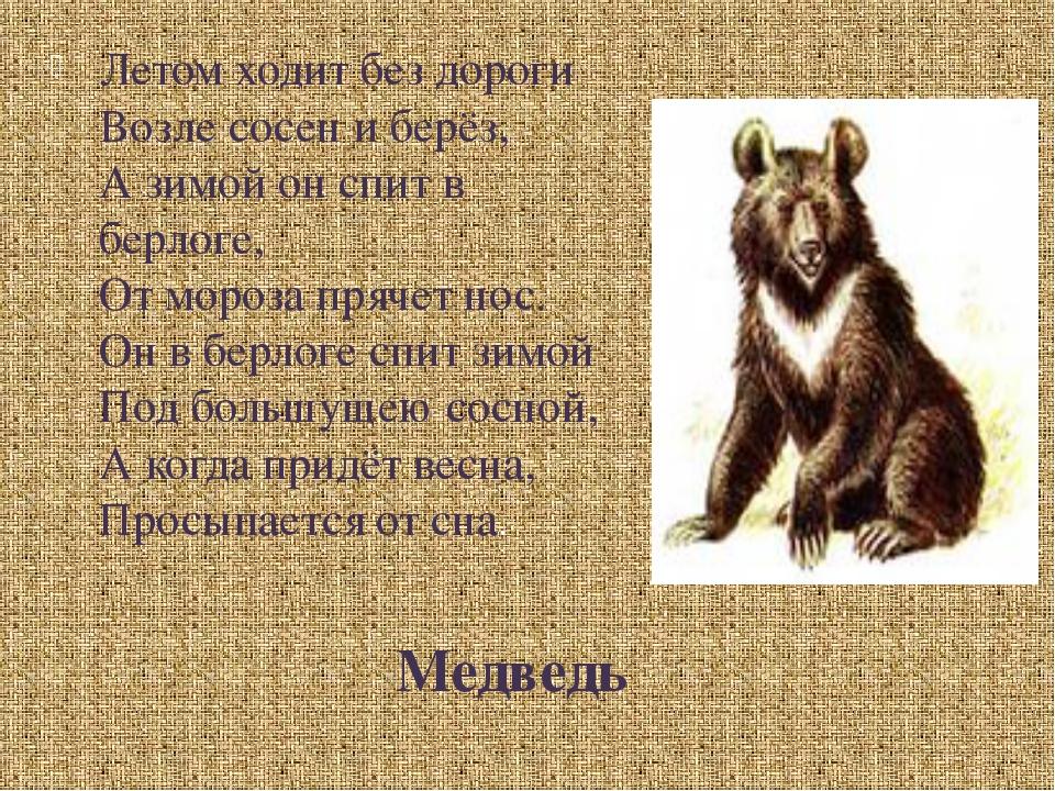 Медведь Летом ходит без дороги Возле сосен и берёз, А зимой он спит в берлоге...