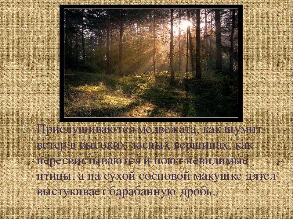 Прислушиваются медвежата, как шумит ветер в высоких лесных вершинах, как пер...