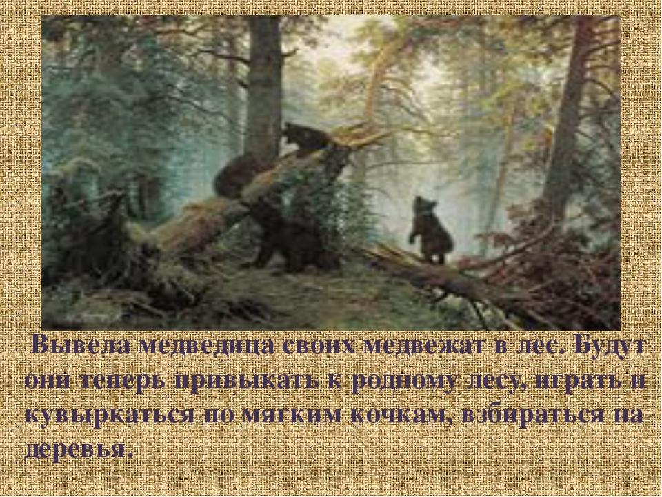 Вывела медведица своих медвежат в лес. Будут они теперь привыкать к родному...