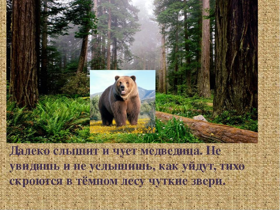 Далеко слышит и чует медведица. Не увидишь и не услышишь, как уйдут, тихо ск...