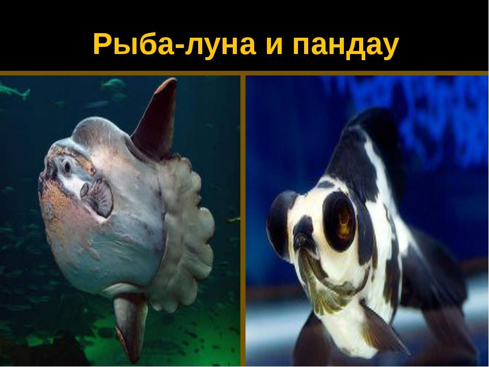 Рыба-луна и пандау