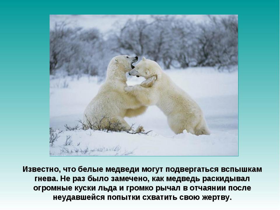 Известно, что белые медведи могут подвергаться вспышкам гнева. Не раз было за...