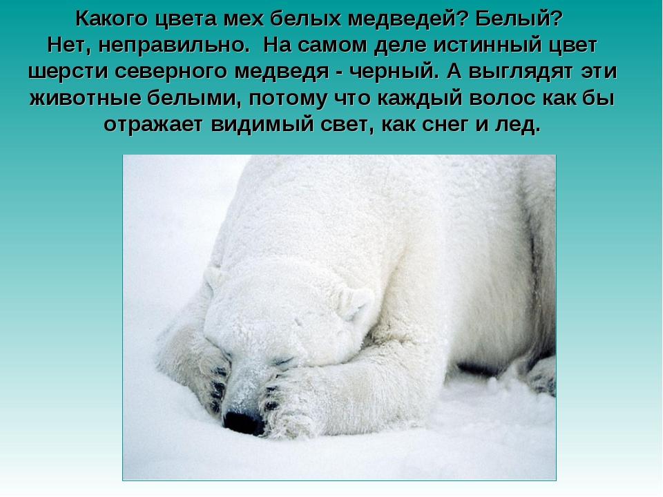 Какого цвета мех белых медведей? Белый? Нет, неправильно. На самом деле исти...