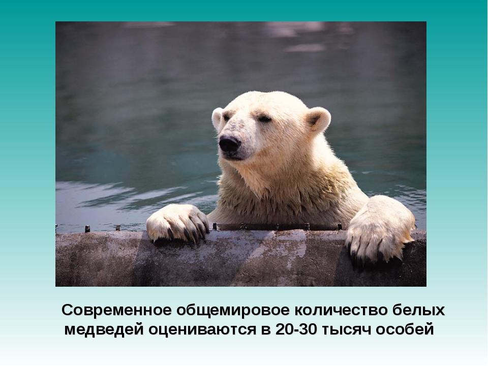 Современное общемировое количество белых медведей оцениваются в 20-30 тысяч...