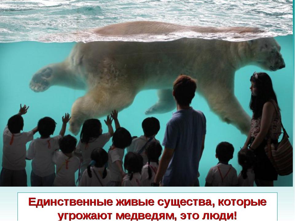 Единственные живые существа, которые угрожают медведям, это люди!