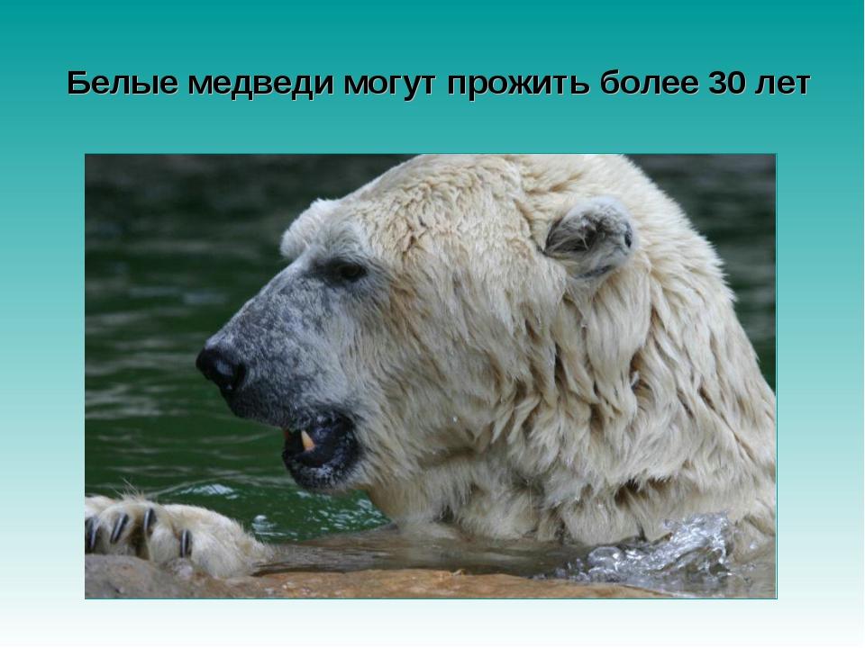 Белые медведи могут прожить более 30 лет