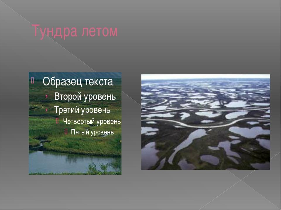 Какую часть россии занимает тундра