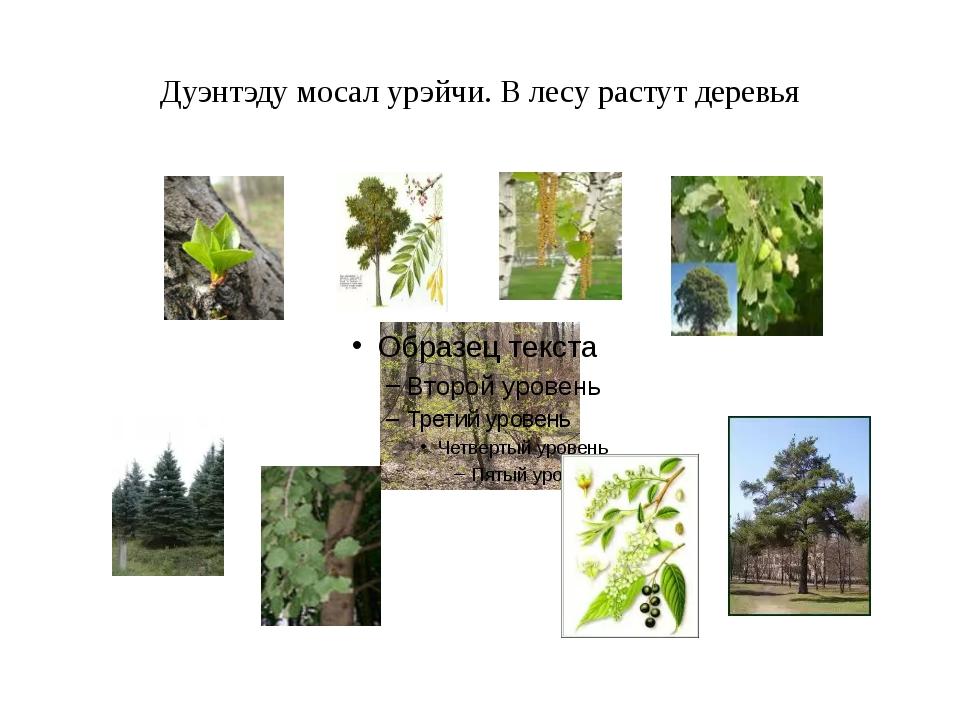 Дуэнтэду мосал урэйчи. В лесу растут деревья