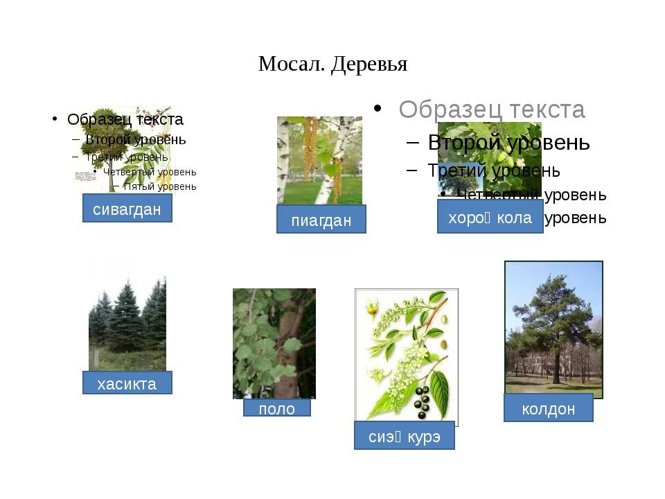 Мосал. Деревья хасикта поло сиэⱧкурэ колдон хороⱧкола пиагдан сивагдан