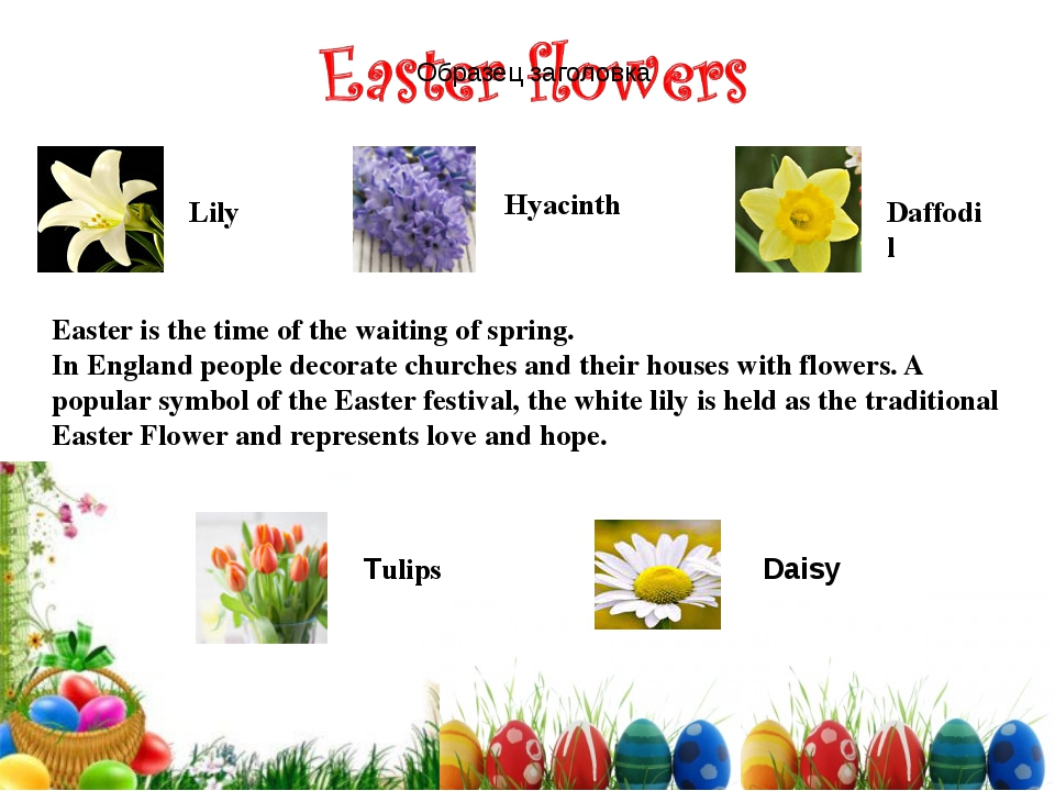 Hyacinth Lily Tulips Daisy Daffodil Easter is the time of the waiting of spri...
