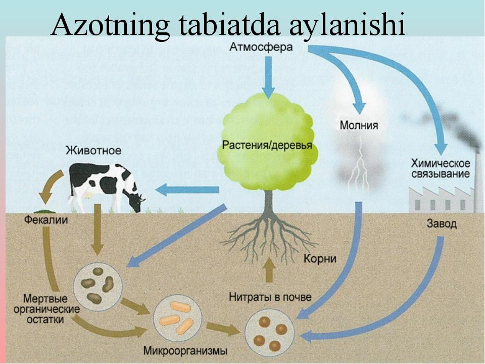 Azotning tabiatda aylanishi