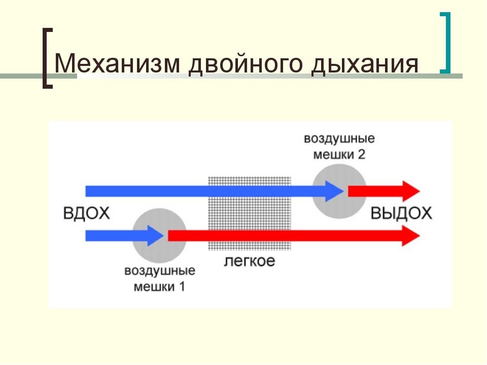 Механизм двойного дыхания