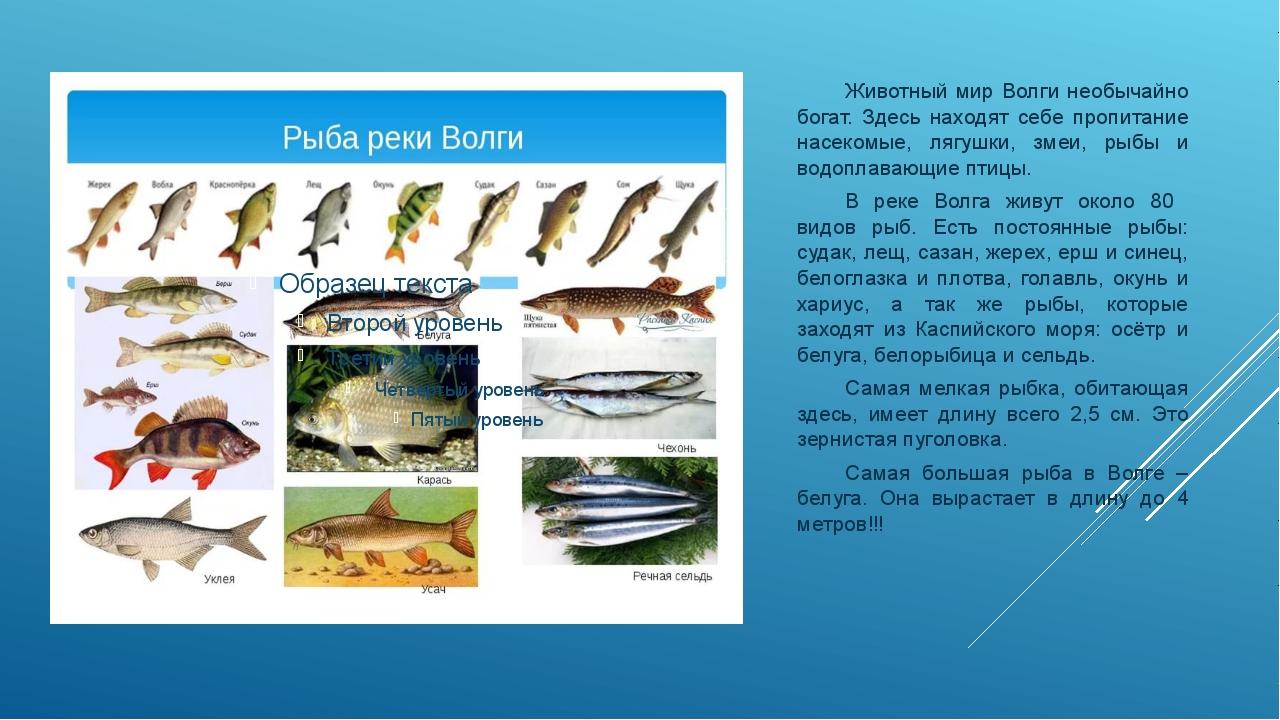 картинки рыбы на средней волге выполняющий роль