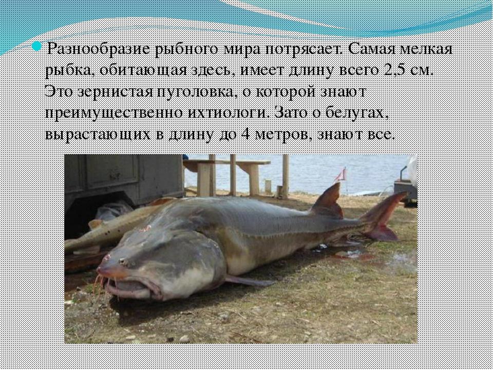 Разнообразие рыбного мира потрясает. Самая мелкая рыбка, обитающая здесь, име...