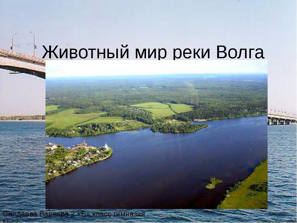 Животный мир реки Волга Салдаева Варвара 2 «Б» класс гимназия №17