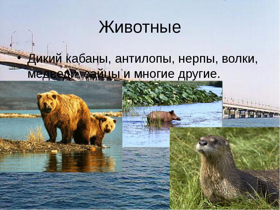 Животные Дикий кабаны, антилопы, нерпы, волки, медведи, зайцы и многие другие.