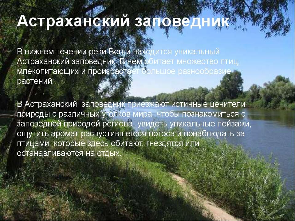 Астраханский заповедник В нижнем течении реки Волги находится уникальный Астр...